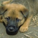 It is illegal to give a dog whiskey in Illinois…
