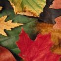 November Affiliate Newsletter