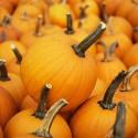 ShareASale Affiliate Newsletter – October 2012