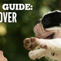 #GiftGuides for Affiliate Marketers – Pet Lover